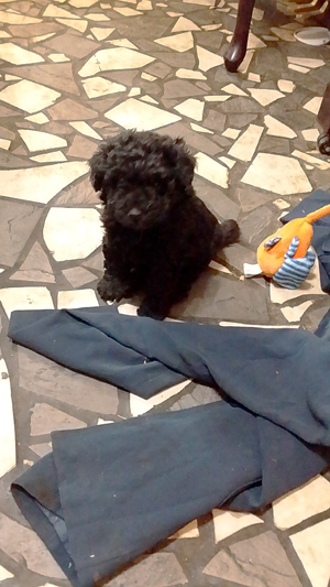 Puppy Sitting by Pants