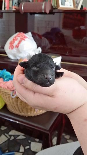 Held Puppy_II