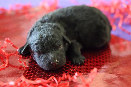 Puppies-10