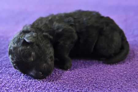 Puppies-12
