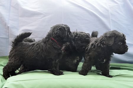 Puppies-25