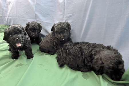 Puppies-29