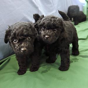 Puppies-32