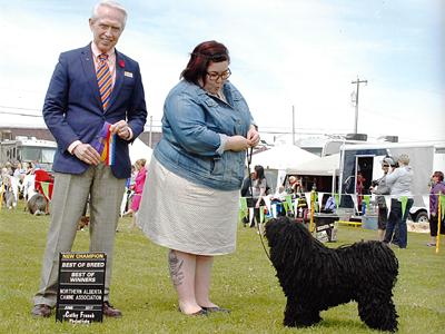 Naca Dog Show